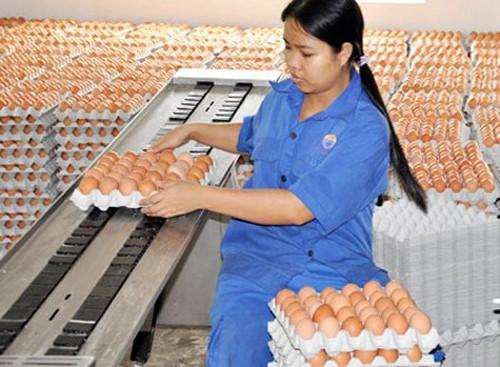 Hội trường cười ồ với quy định 'đếm trứng thu phí'