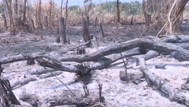 Khởi tố 4 vụ án phá rừng ở Vườn quốc gia Yok Đôn