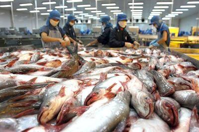 Xuất khẩu sang Mỹ: Việt Nam lại khổ vì bán quá rẻ...