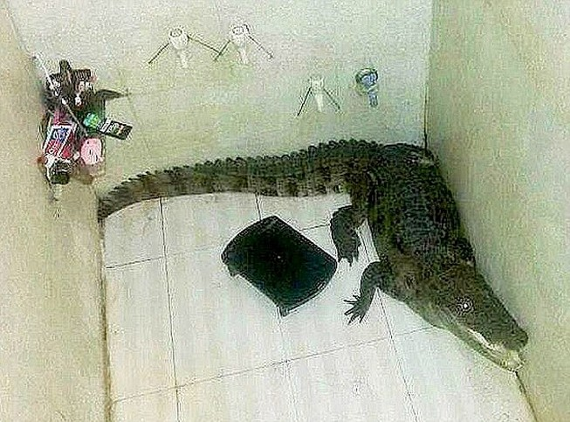 Chủ nhà suýt ngất khi phát hiện ra con cá sấu trong buồng tắm