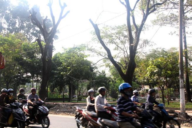 Đốn hạ 116 cây xanh cửa ngõ sân bay Tân Sơn Nhất