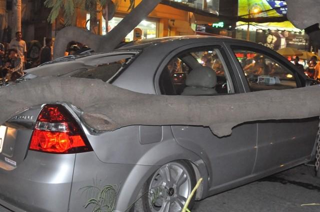 Dừng đèn đỏ, hai ô tô bị cây cổ thụ ngã đè móp méo