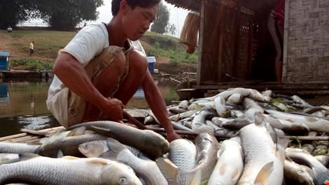 Công an Thái Bình điều tra người tung tin hải sản bị chết trắng