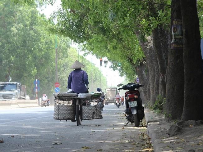 Chặt 1.300 cây trên đường Phạm Văn Đồng để mở đường