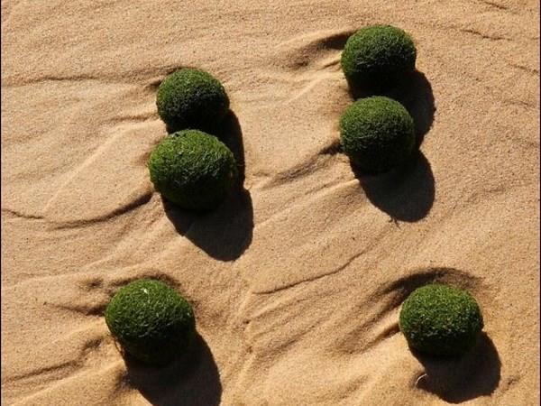 """Phát hiện những """"quả trứng xanh"""" kỳ lạ dạt vào bờ biển Sydney"""