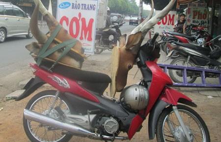 Chợ động vật hoang dã trên phố