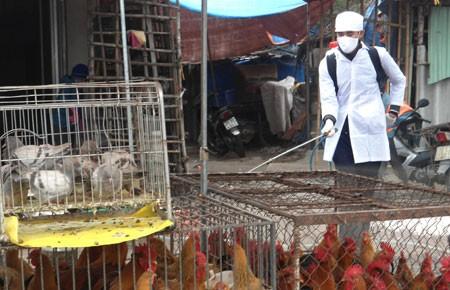 Ứng phó các tình huống phát hiện virus cúm A/H7N9