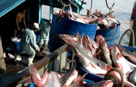 Có thể nâng giá cá tra để thoát bị kiện