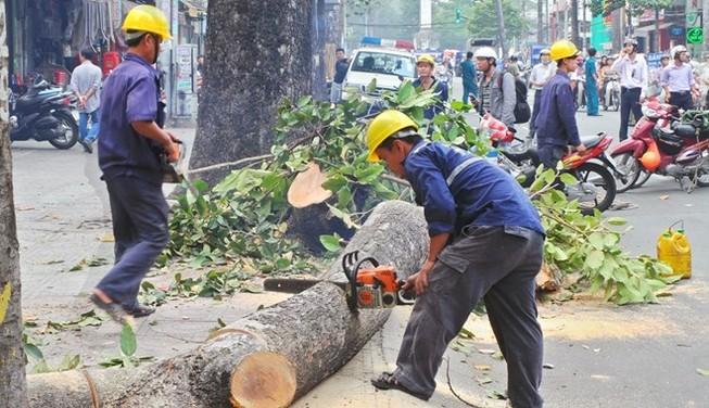 'Không có lợi ích nhóm khi chặt 6.700 cây xanh'