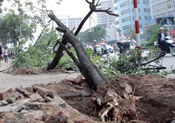 Lãnh đạo Hà Nội nhận khuyết điểm về vụ chặt cây xanh