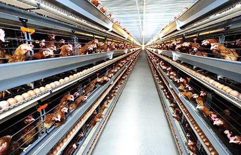 Nông nghiệp cõng hơn 1.000 loại phí, lệ phí