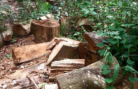 Đốn cây, chẻ đá phá khu di tích núi Chứa Chan