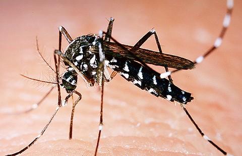Phát hiện ca nhiễm virus Zika ở Indonesia