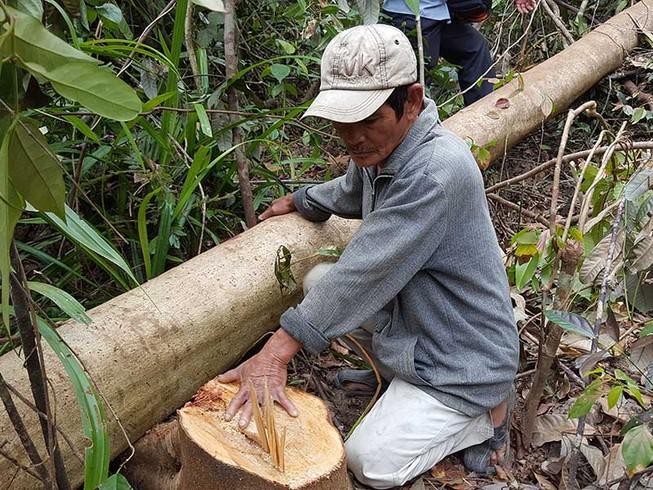 Vụ phá rừng để nuôi bò: Sẽ báo cáo Thủ tướng