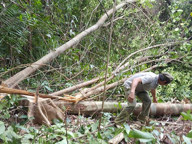 Cựu lãnh đạo Phú Yên: Cần dừng ngay việc phá rừng!