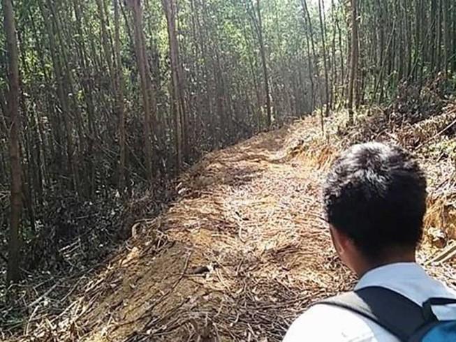 Lén hạ cây trong rừng phòng hộ làm đường