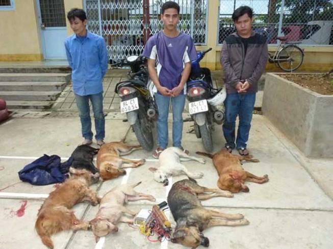Trộm chó, đánh trả người truy đuổi: Mấy tội?