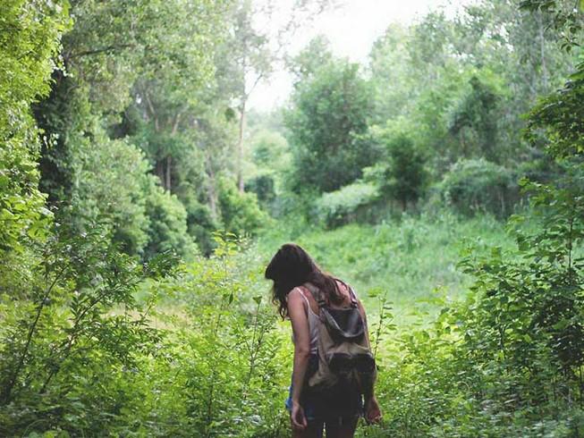 'Tắm rừng' nâng cao chất lượng cuộc sống