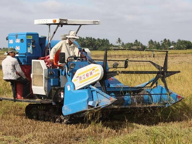 'Mới gió heo may, hạt gạo Việt đã lăn ra bệnh'