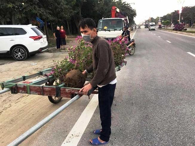 Kẻ gian nhổ trộm 1.400 cây hoa ly tết
