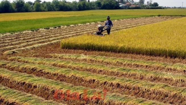 Xây nhà trên đất trồng lúa sẽ bị phạt nặng