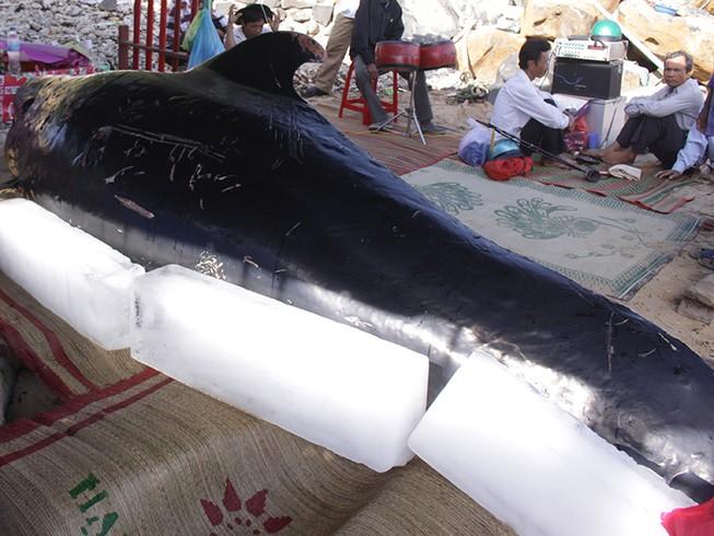 Cá voi khủng lụy vào bờ biển