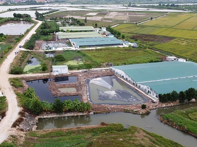 Loạt 6 trang trại heo xả thải gây ô nhiễm