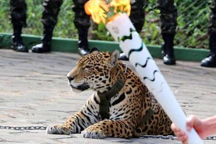 'Linh vật' đội Olympic Brazil bị bắn chết ngay sau lễ rước đuốc