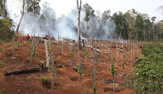 Đình chỉ công tác chủ tịch xã để mất rừng
