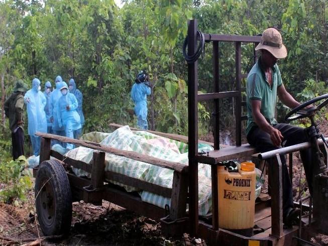 Dịch tả heo châu Phi tấn công, Gia Lai khẩn cấp dập dịch