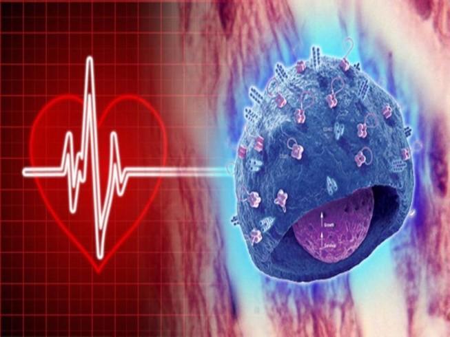 Ghép tim làm thay đổi thói quen, tính cách?