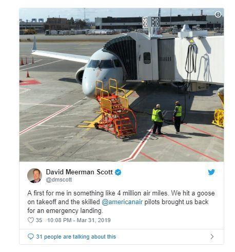 Máy bay buộc quay về vì va phải ngỗng trời