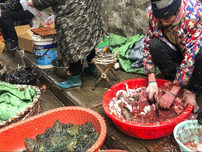 Việc buôn bán và giết mổ động vật hoang dã được cho là nguyên nhân lây truyền virus corona. Ảnh: South China Morning Post