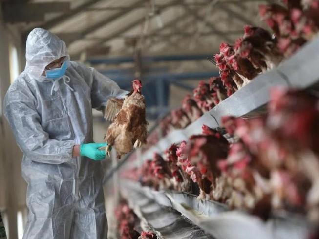 Trung Quốc thông báo phát hiện ổ dịch do virus cúm A/H5N6 gây ra ở tỉnh Tứ Xuyên. Ảnh: SCMP