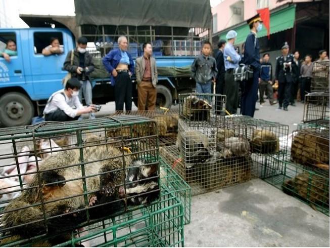 Một chợ buôn bán động vật hoang dã tại tỉnh Quảng Châu, Trung Quốc. Ảnh: SCMP