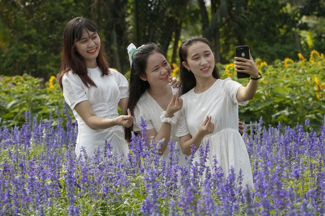 Đẹp ngỡ ngàng Cánh đồng hoa bên sông Sài Gòn