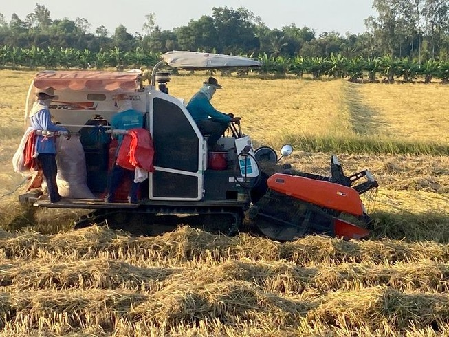 Hậu Giang: Lúa trúng mùa được giá, nông dân vui
