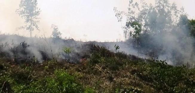 Điều tra vụ phá rừng rồi phóng hỏa để xóa dấu vết