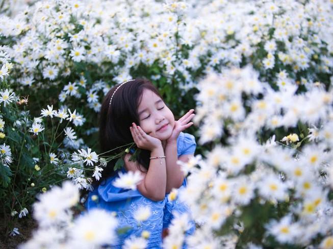 Vườn cúc họa mi 10.000 cây hút hồn giới trẻ Đà Nẵng