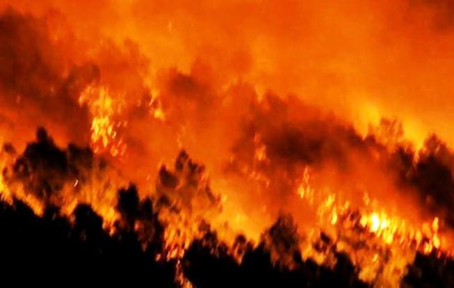 Đang cháy rừng, lửa bốc lên ngùn ngụt bên quốc lộ 1A