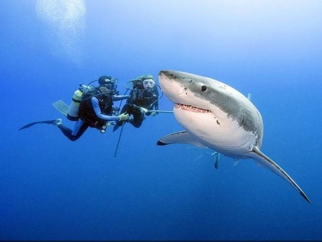 Có dễ 'thoát nạn' khi đang bơi gặp cá mập?