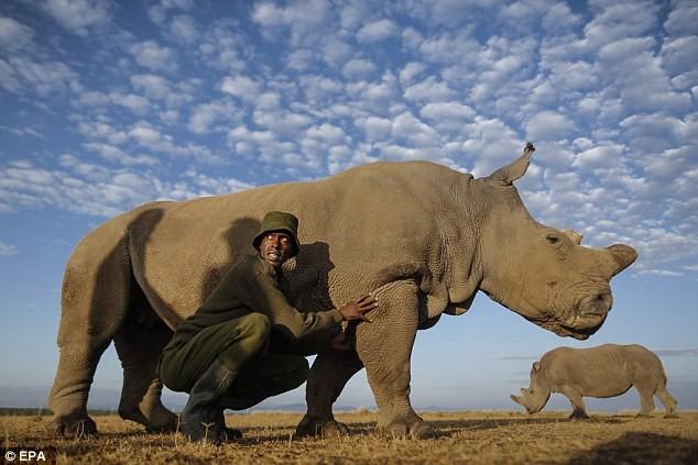 Cảnh báo nạn săn bắt động vật quý hiếm qua Facebook