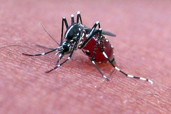 Trái đất nóng lên làm nhiều virus giết người sống lại
