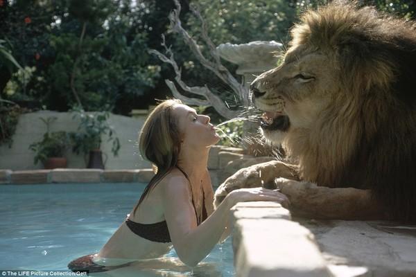 Kinh hãi nuôi sư tử trong nhà làm thú cưng