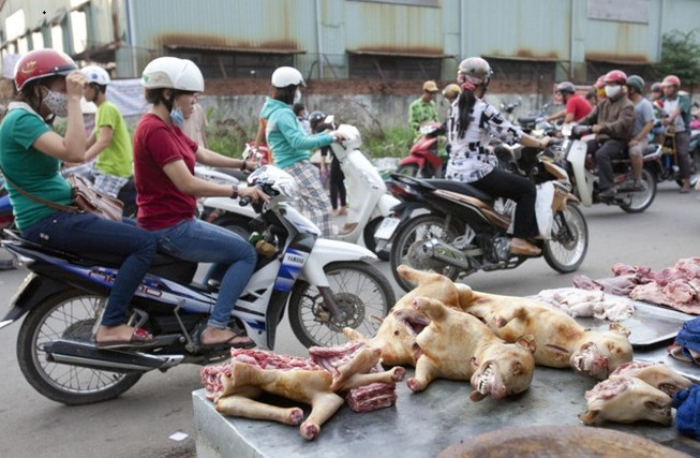 Khi thịt chó trở thành nguồn… thực phẩm mới