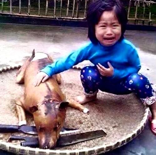 """Câu chuyện xúc động về bức ảnh """"cô bé khóc bên chú chó bị giết thịt"""""""