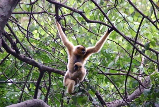 Người dân được phép nuôi động vật rừng