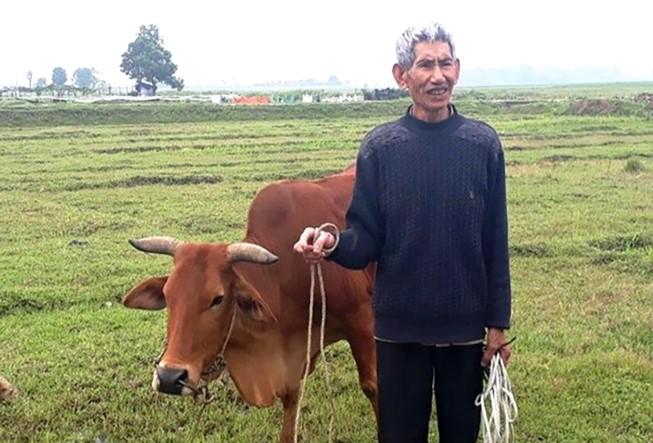 Vụ trâu bò ăn cỏ, chủ phải trả phí: Phê bình chủ tịch xã