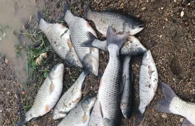 Công an vào cuộc vụ cá chết bất thường trên sông Chu