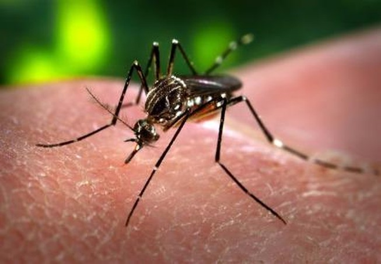 Người nước ngoài nhiễm virus Zika sau khi du lịch ở Việt Nam
